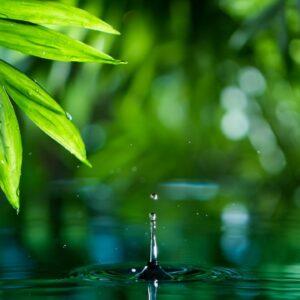 Cleansing Meditation